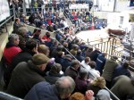 A Packed Ringside at GVM for the Hereford Show & Sale at Tullamore