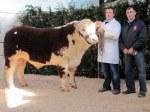 Glaslough Levi with Nigel Heatrick & purchaser at _4,250 Ivor Anderson