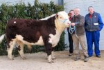 ardnagross barry 2 with owner thomas plunkett and in background cian barry fitzsimons_4050