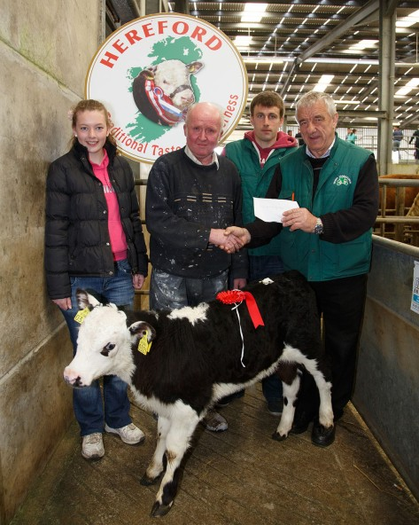William Forde, Drimoleague, seller of the 1st prize bull calf, receiving his prize from Pat McCarthy, Hereforf Council, watched by Clodagh Lynch  and Paddy Hickey, West Cork Hereford Club, cheque presented by Pat McCarthy