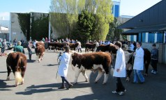 Nenagh Sale 19th April 2014