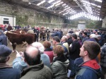 Part of the huge crowd of interested spectators at the Hereford judging