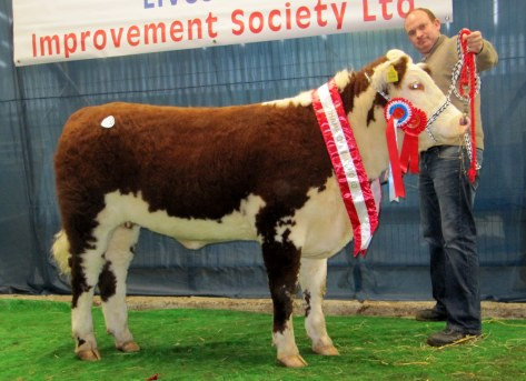 Champion Female Steil Saoirse 240 sold at E3,100 with Cathal McCormack