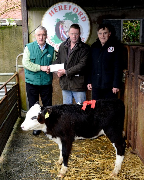Pictured at the annual Irish Hereford Society calf show and sale at Bandon Mart on Monday was Pat McCarthy Hereford Council presenting the prize for the best Heifer calf of the day to William Collins, Drinagh and at right was John White chairman West Cork Hereford society. Picture Denis Boyle