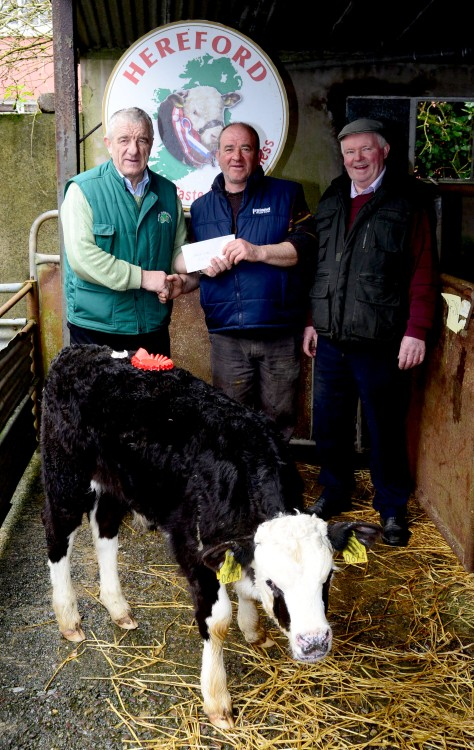 Pictured at the annual Irish Hereford Society calf show and sale at Bandon Mart on Monday was Pat McCarthy Hereford Council presenting the prize for the best Bull calf of the day to Patrick Fiton from Waterfall Co Cork and at right was JJ Barrett Treasurer of the West Cork Hereford society. Picture Denis Boyle