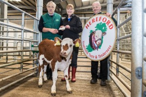 champion heifer owned by Corneilus Cronin, Carrignavar which sold for €215 with Pat McCarthy, Hereford Council Member & Ted O'Sullivan, Bartlemy, Hereford Breeder.