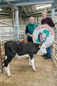 champion bull which sold for €305 with Pat McCarthy, Hereford Council Member, owner Elaine Flavin, Barnageehy, Youghal & Michael Morrisson, Killeagh, Hereford Breeder.