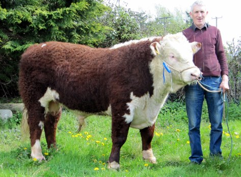 Sheepwalk Tobi with James Kirwan E2,900