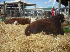 Comfort & Contentment at Fingal show