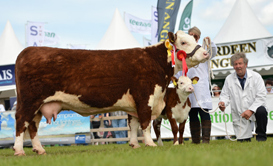 Reserve Female Champion Knockmountagh Olga bred by Eamon McKiernan