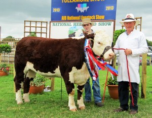 National Supreme Hereford Campion 2013 Kye Shelia 596 with Patrick & Padraig McGrath