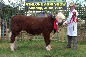 Reserve Champion Moyclare Malcolm with Michael Molloy