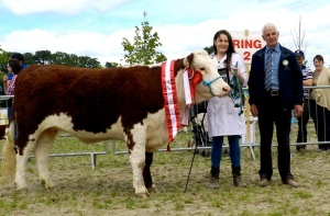Kilsunny Doreen's Jasmin - 1st & Overall Supreme Hereford Champion pictured with Susan Dudley (handler) and Edward Jeffries (judge)