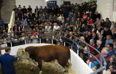 Last animal into the ring Stock bull Grianan Krusader sells at 3,050 to Peter Lalor