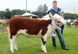 Reserve Champion Springvilla Rosabell 441 with Niall Roycroft