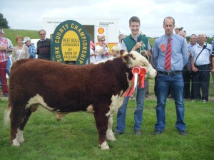 Overall Supreme Hereford Champion Springvilla Kieran 440 with Niall Roycroft and judge Mr Eustace Burke