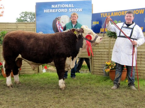 1st Prizewinner Cavehill Storm with Irish Hereford Society President Ivor Deverell & Patrick Farrell