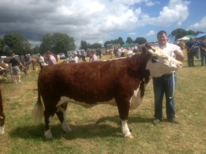 John Murphy with  prize winning cow