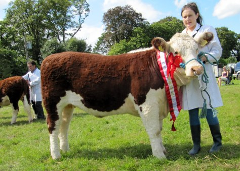 4.Premier Heifer Calf Champion Lakelodge Queen Mildred 7th with Susan Dudley
