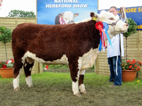 Reserve Female Champion Griananpoll Orange M639 with Anselm Fitzgerald