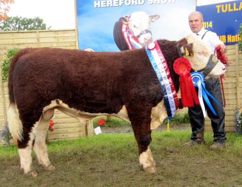 Reserve Male Champion Moyclare Malcolm with Michael Molloy