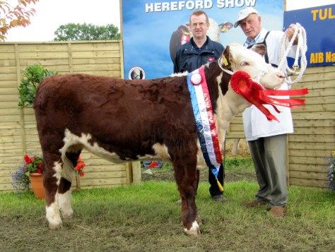 Heifer Calf Champion Knockmountagh Cindy with Liam Chadwick of sponsors ABP and owner Eamon McKiernan - Copy