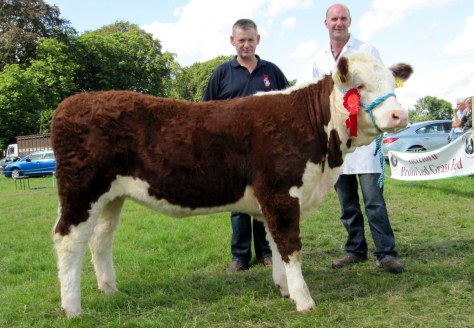8.1st prize-winner River Rock Ita with owner Tony Hartnett and Michael Cleary of sponsors Irish Hereford Prime.