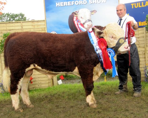 Bull Calf Champion Moyclare Malcolm with Michael Molloy
