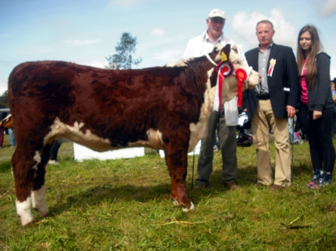 Hereford Champion Knockmountagh Cindy with Eamon McKiernan and judge David Larkin