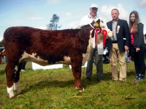 Hereford Champion Knockmountagh Cindy with Eamon McKiernan and judge David Larkin