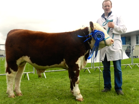 Reserve Munster Junior Bull of the year Clondrina 1110 with owner Declan Donnelly