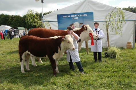 1st Prizewinner Kilsunny Doreen's Ivy with her calf and owner Christine Drumm