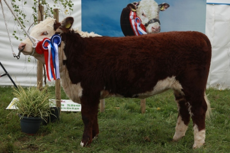 Reserve Supreme Champion Knockmountagh Cindy exhibited by E & J McKiernan