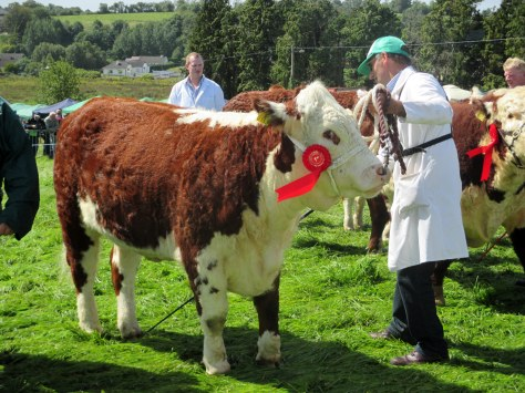 Reserve Champion Corran Hill Annabell with Ivor Anderson