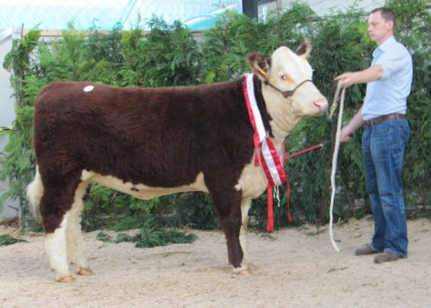 Champion Female Grianan Orange M653 with Anselm Fitzgerald €3,500