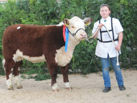 Reserve Champion Female Griananpoll 1 Orange N686 €2300 with Sarah Murray for T & A Fitzgerald