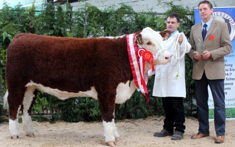Champion Heifer Gouldingpoll 1 Duchess 591 with owner Matthew Goulding and judge Andrew Hughes UK.