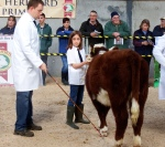 Kerri Flynn assisting Dad Cathal with calf Rossmore Dolly