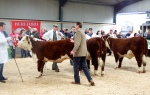 Judge Andrew Hughes making his selection in the Female Championship