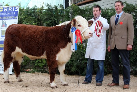 Reserve Champion Heifer Corlismorepoll 1 Lady 748 with Gary McKiernan and judge Andrew Hughes UK.