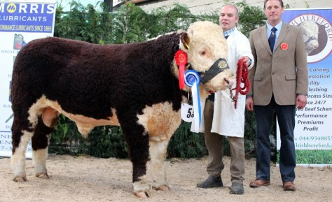 Reserve Male Champion Moyclare Mariner with owner Michael Molloy and jdge Andrew Hughes UK