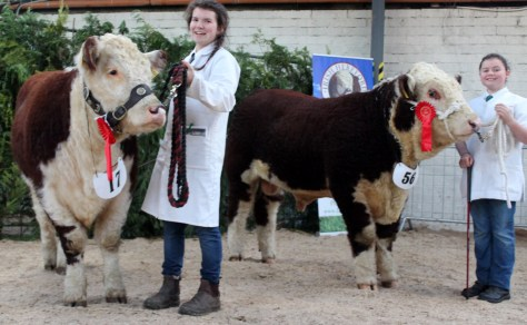 Winners Young Handler Competitions - On Left Age 14 -21 - 1st, Catherine Smyth with Ardmulchan Clover 610 and Under 14- 1st, Sarah Murray with Grianan Nobleman