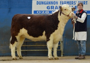 Pallas 1 Eva from Adrian and Sandra Irvine was the top priced female – selling for 3,000 guineas at the Elite Hereford Breeders sale.