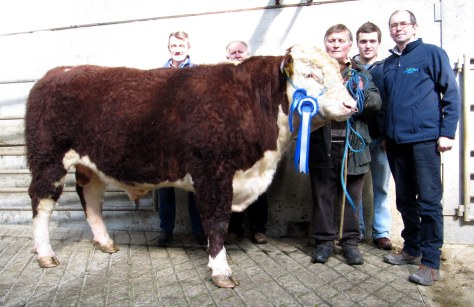 Reserve ChampionChatsworth Hector €4,500 with sponsor Denis Dalton Chancellor Mills, purchaser Christy Finn, owner Tom Hennessey, Pat Cantwell and Patsy Wilson of Chancellor Mills