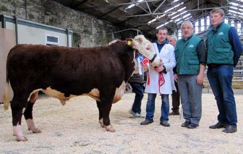 Reserve Champion Fortregal Ezra with owner Gearoid Lucy, Pat McCarthy, Council membver IHBS and judge Ivor Deverell, President IHBS