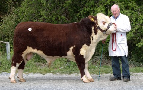 Kye Harry 665 with owner Padraig McGrath €3,400