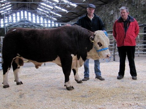 Sale topper Arlinstown Star 4th with owner Declan Murphy and purchaser John Dunne, Ladysbridge. €3,400