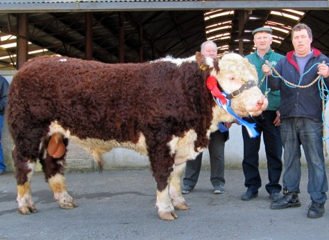 Reserve Champion Ballinveney Pirate €3,350 with John Johnston in background, Judge Gene Lynch, Bantry and owner Rory Farrell