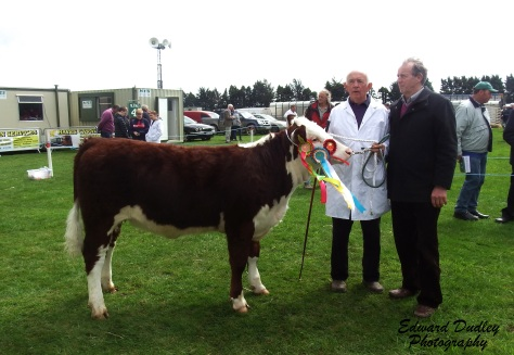 Supreme Hereford Champion & Overall Female Champion: Banteer 1 Gem with Anthony McCarthy (exhibitor) and Michael Fox (judge)