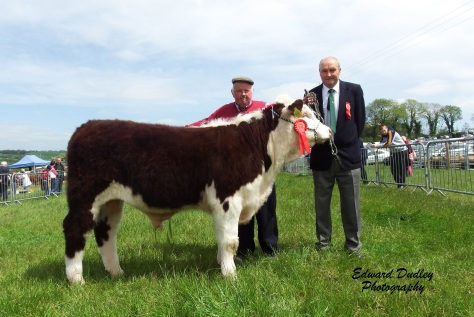 1st & Reserve Supreme Champion Lakelodge Joe 7 with Henry Dudley exhibitor and Pat Sheedy judge